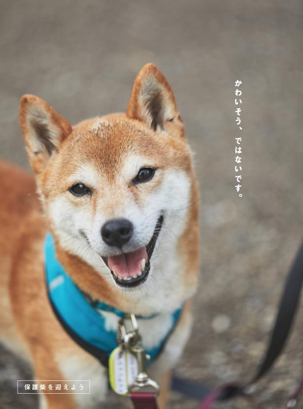 『柴犬ライフ』2020年秋号〜20歳まで生きる方法〜の目次画像0