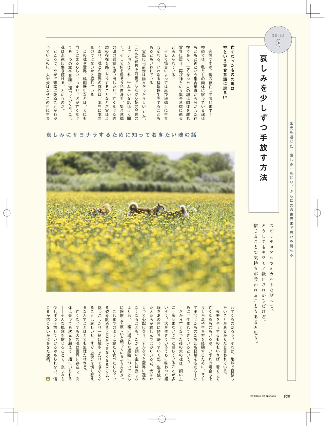 『柴犬ライフ vol.5』〜柴犬ってなんだ?〜の目次画像1