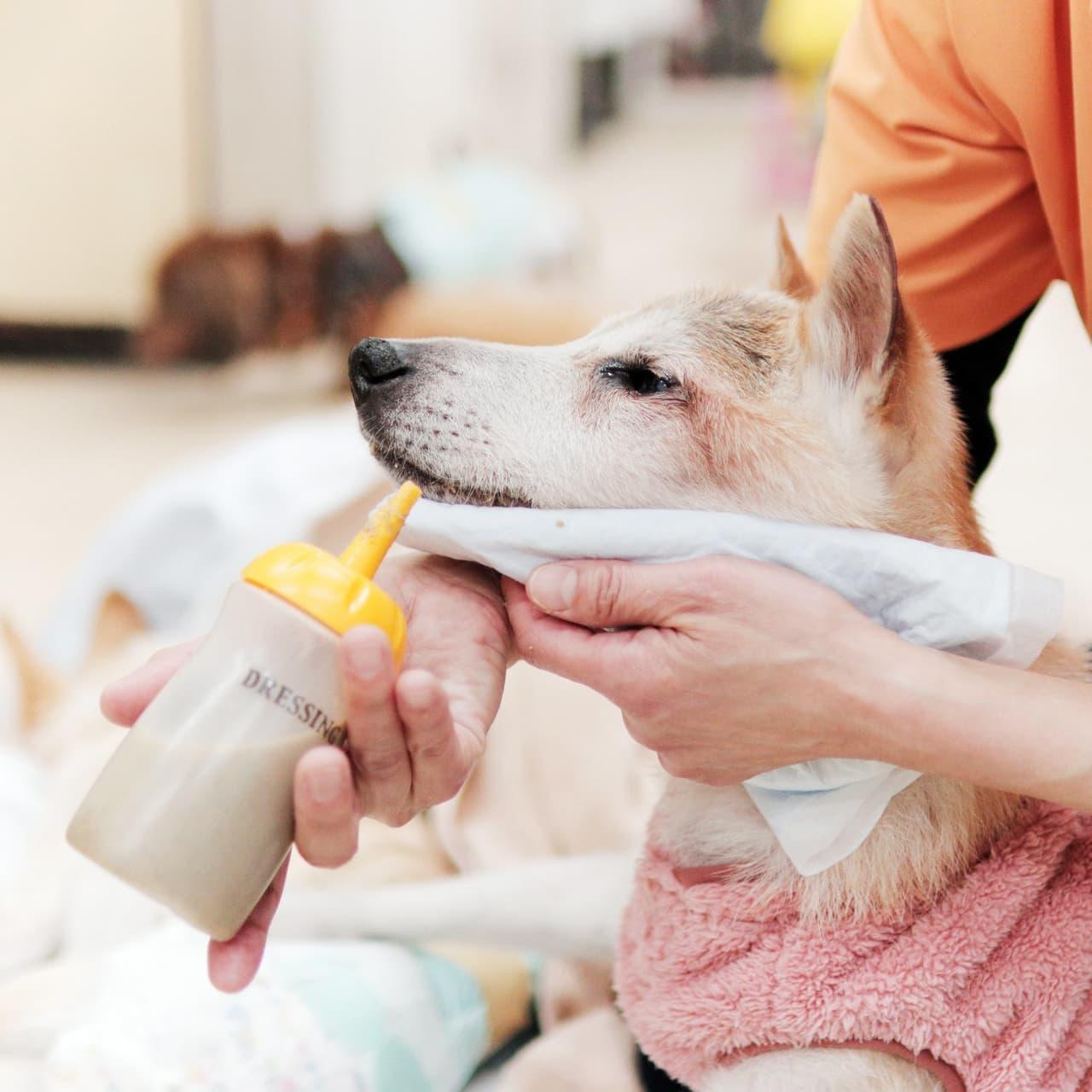 【長寿になった柴犬との暮らしかた】老犬ホームは愛犬を手放す場所ではない