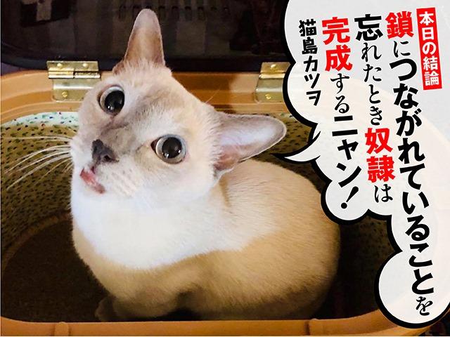 猫島カツヲ