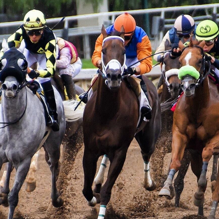 年末恒例「有馬記念」開催間近!馬にまつわる珍名さん