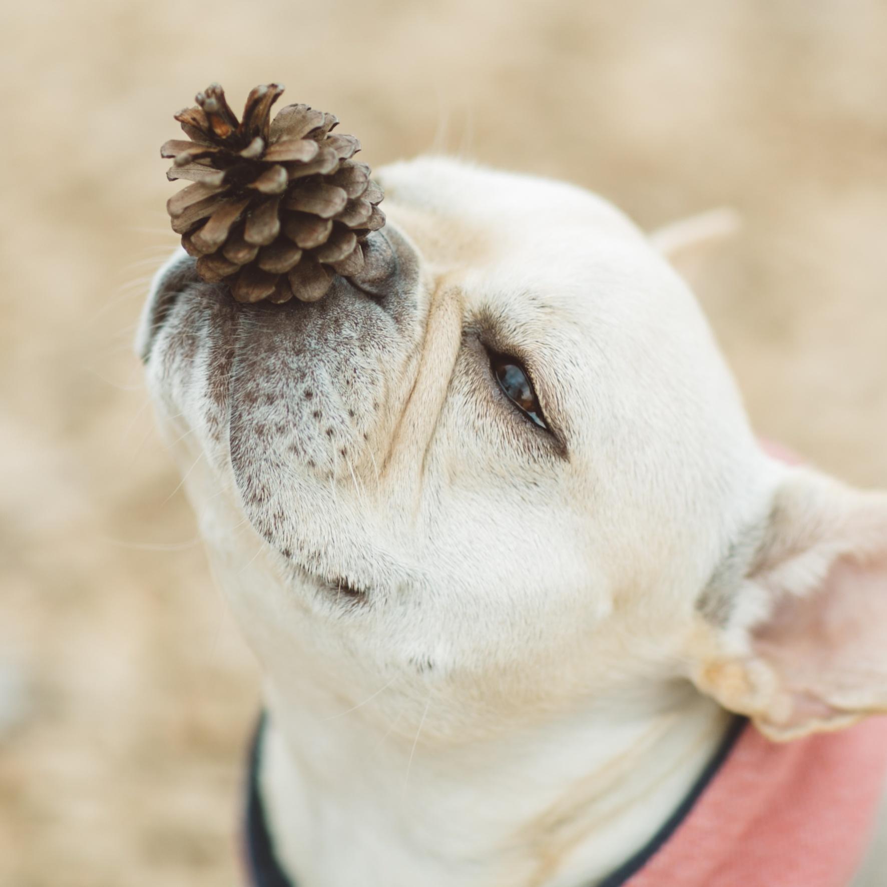拝啓 犬と暮らそうと決意したあなたへ<br />byフレンチブルドッグ専門誌「BUHI」編集長