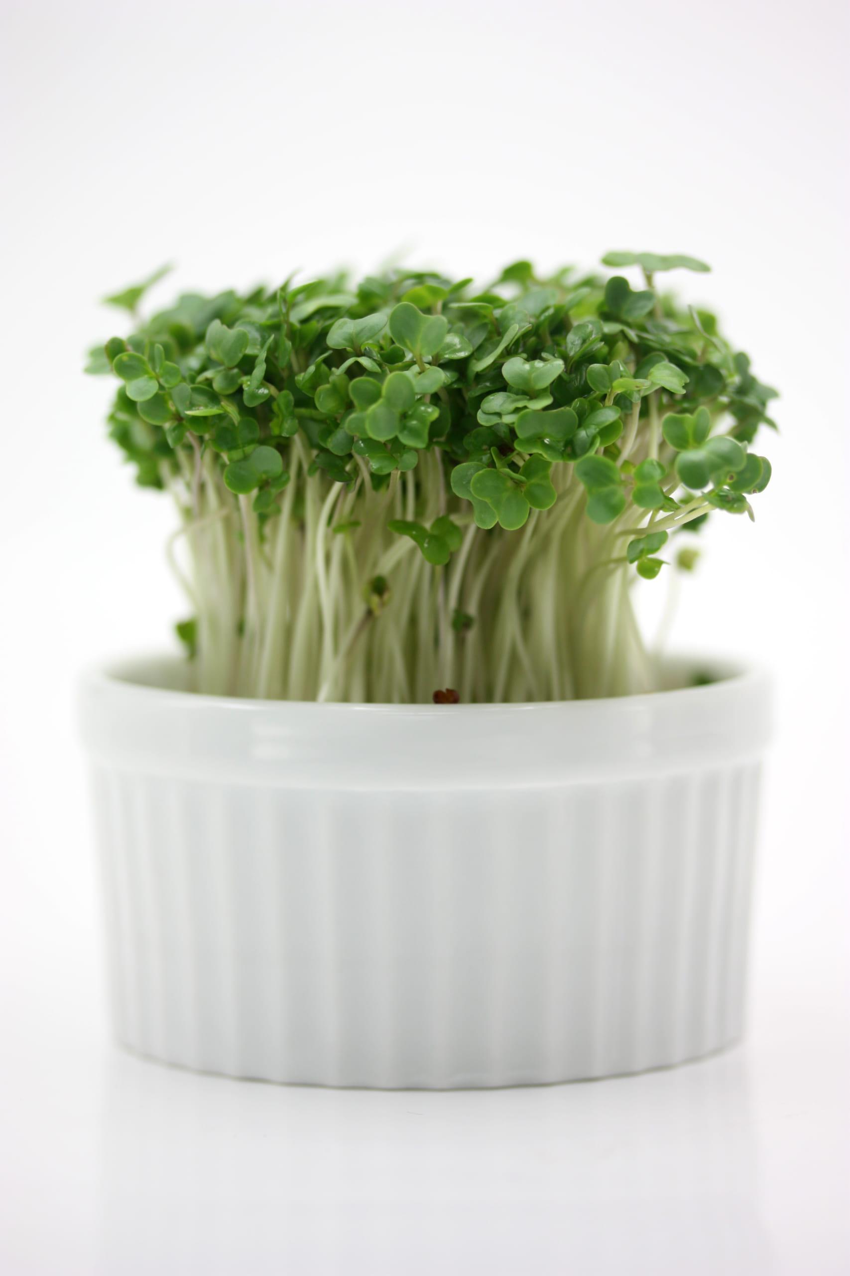 抗がん効果で脚光を浴びる高機能野菜とは?