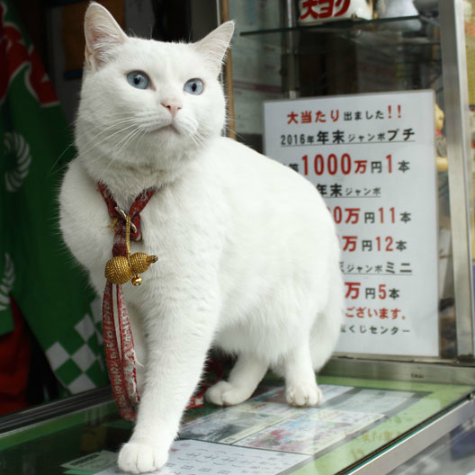 猫のかわいい表情を撮るにはどうすればいい?
