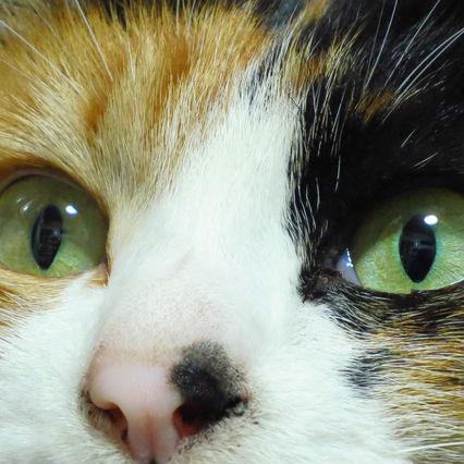 武士は猫の目から時間を読み取っていた【2月22日は猫の日!】