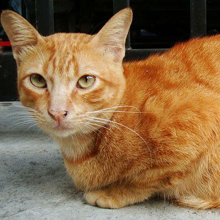 香箱座り、ヘソ天…なんて愛らしい猫の動き!