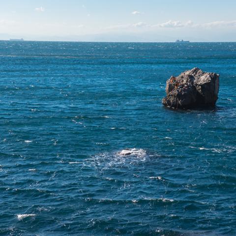 海の幸は誰のもの?