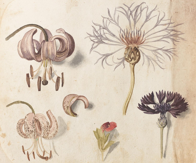 英国庭園の香りに包まれながら<br />ボタニカル・アートを鑑賞!