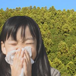 花粉症の季節にみんなを困らせる「杉」は、影ながらみんなを助けていた!!