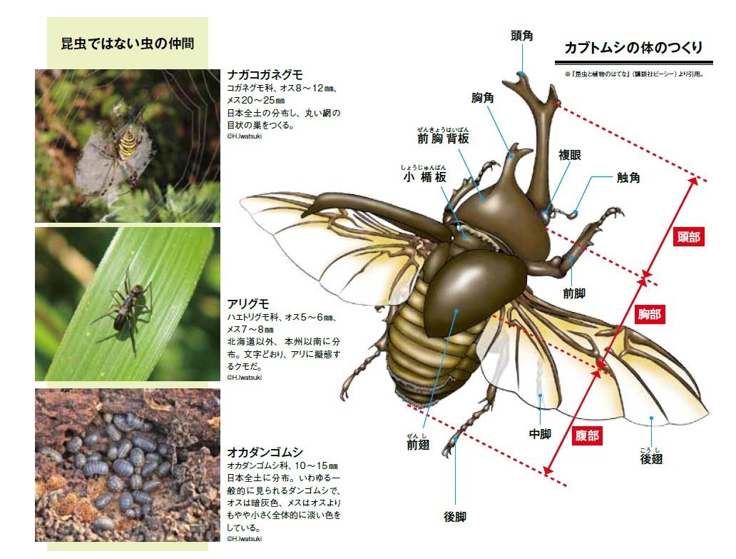 「虫」イコール「昆虫」ではない?昆虫の基本を知ろう!【自由研究のヒント②】