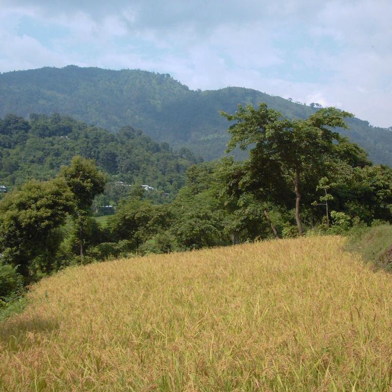 弥生時代の始まり、稲作文化は制圧ではなく融和によって広がった