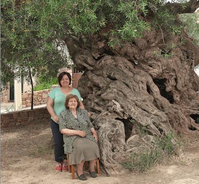 オリンピックにも登場する樹齢3000年のオリーブの樹