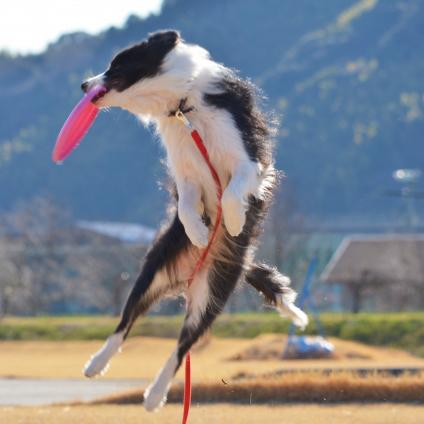 愛犬と一緒に楽しめる、オススメの趣味7選