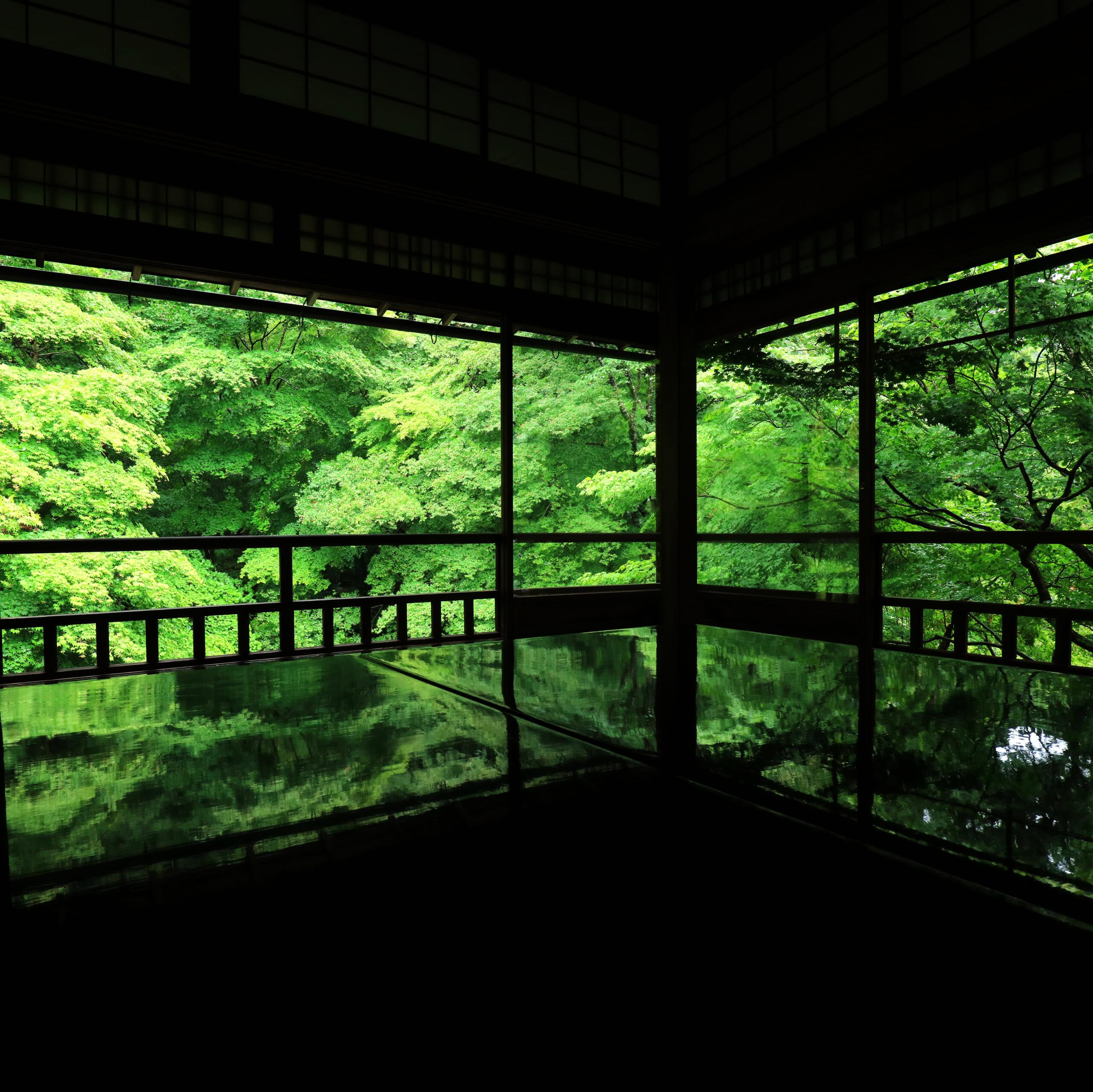 年にたった2回の特別拝観<br />京都・瑠璃光院の青もみじライトアップ