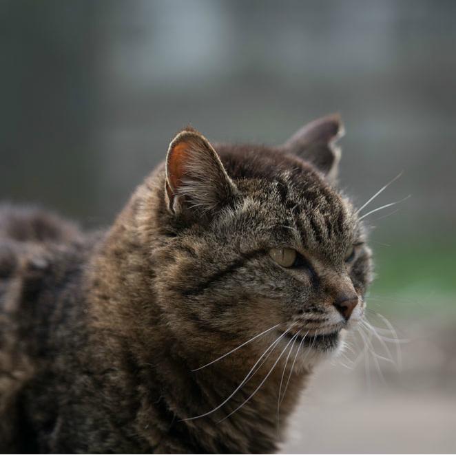 浅草や谷中などの「猫町」、意外と知らない散策の注意点