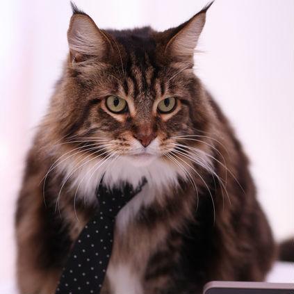 イギリスで公務員として働く猫たち
