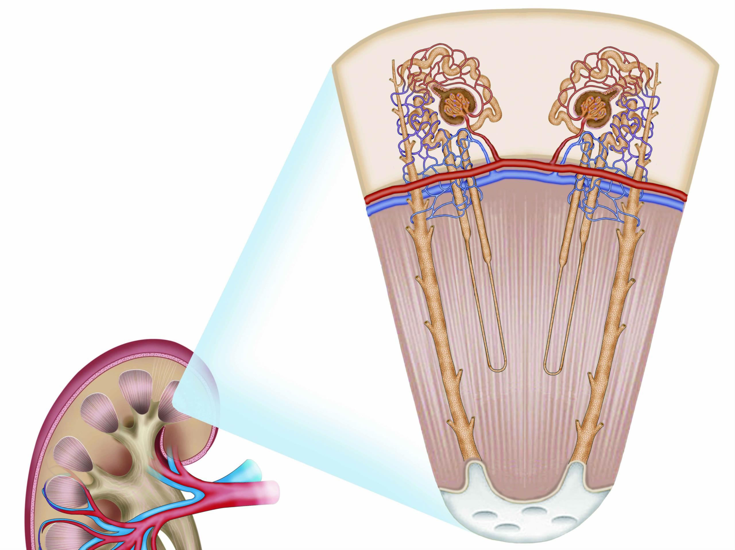 黄褐色の尿は内臓疾患の可能性大