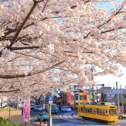 奈良時代の「花見」は、桜ではなく●●を見ていた