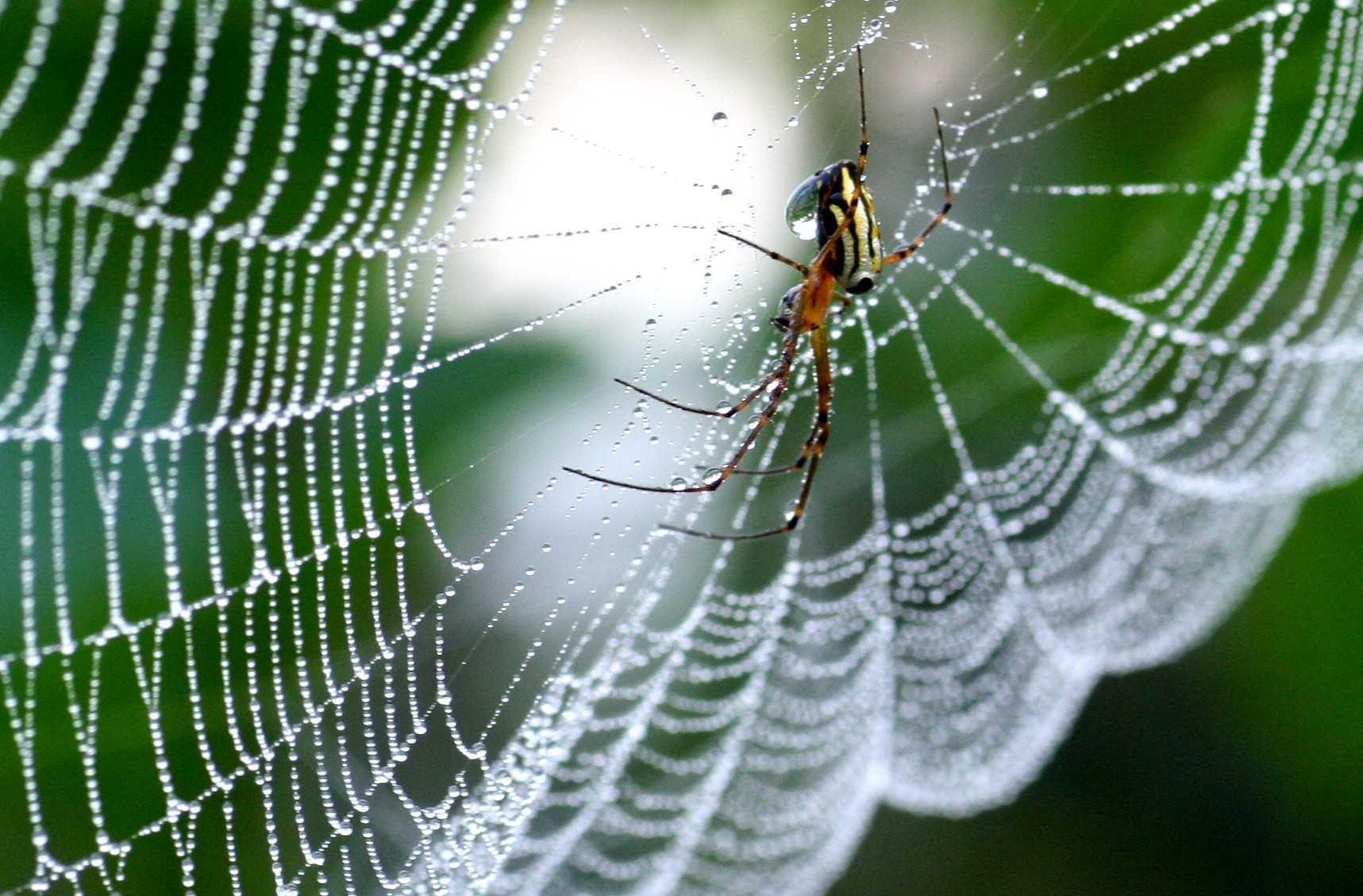 リアルスパイダーマンが実現!? 世界中から注目を集める最強繊維、人工クモ糸化の技術!!