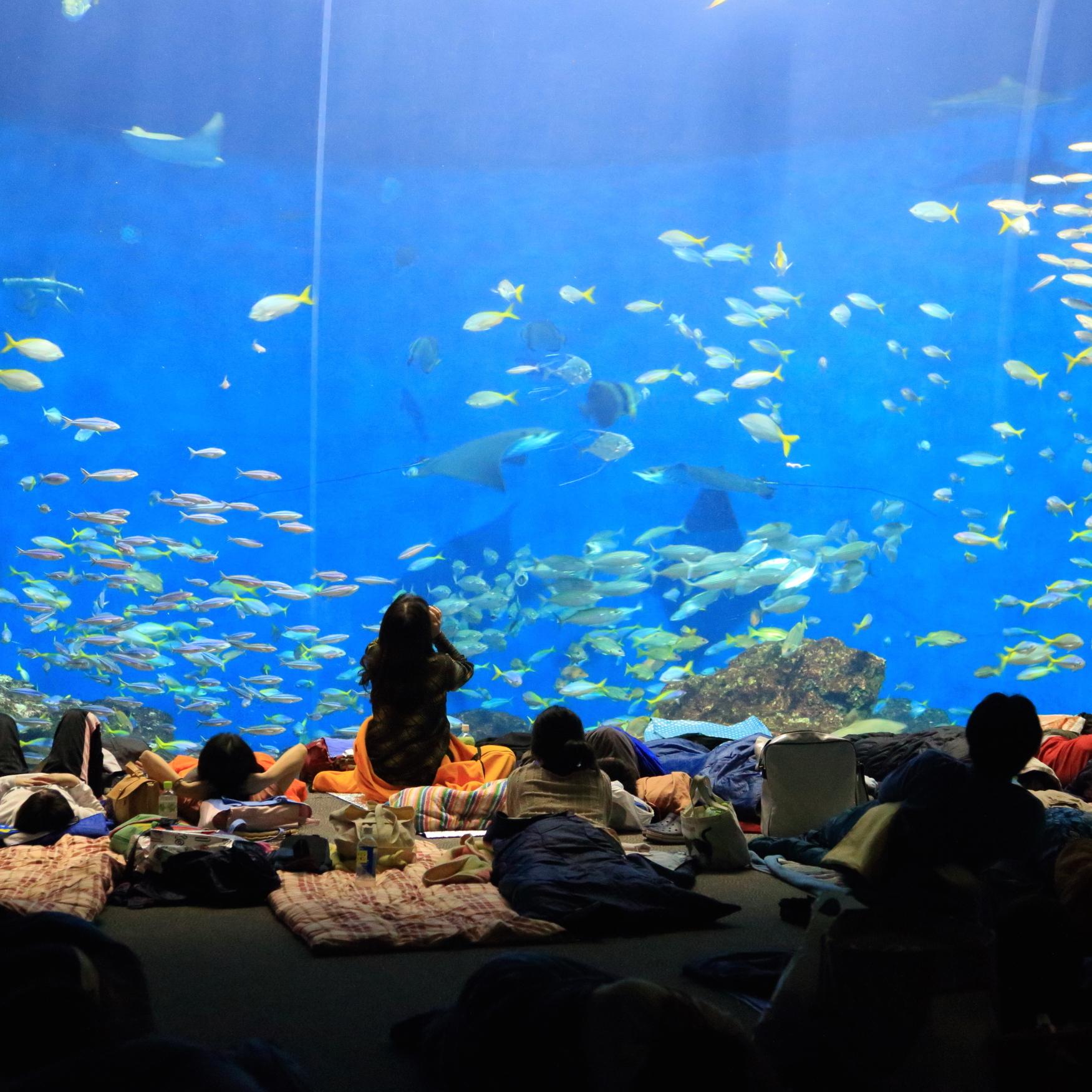 お泊まり&夜の水族館を満喫!<br />鴨川シーワールド・ナイトツアー