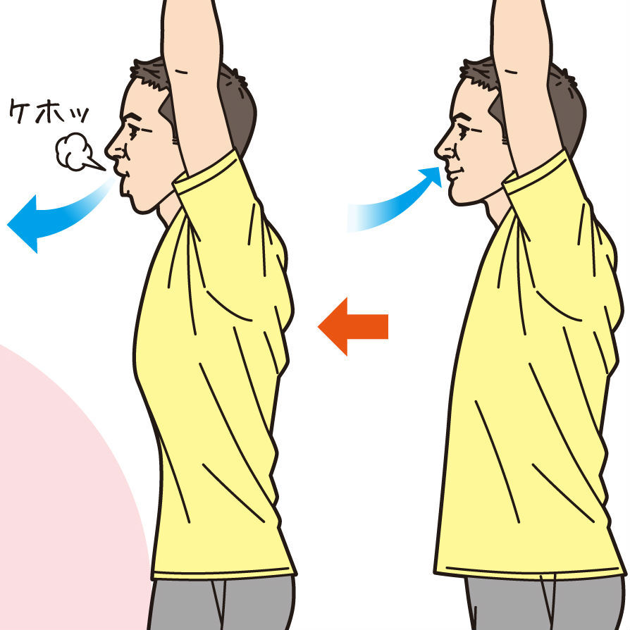 腹式呼吸は血管の老化を防止する <br />「ケホッ」とせきをして息をはききるのがポイント