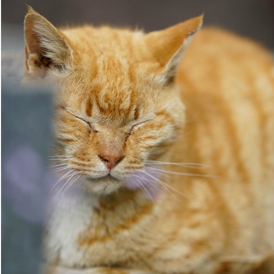 吉原の遊女のおかげ? 浅草が「猫町」といわれる理由がおもしろい<br />