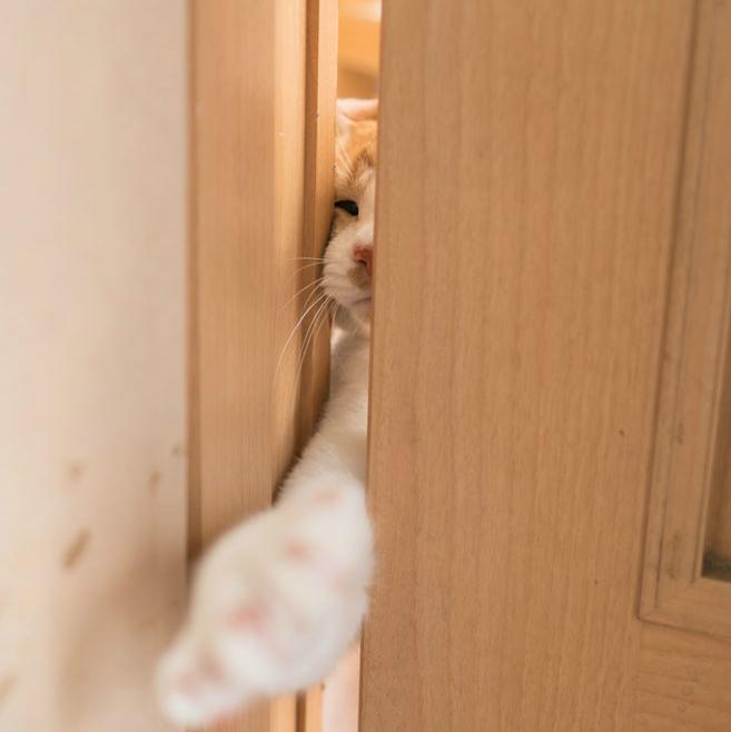 映画『猫忍』で大注目のぽっちゃり猫!「金時さん」のオフに密着