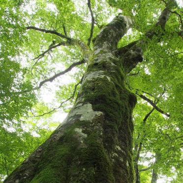 人間の知識は不完全であり、天地自然の法則「道」TAOを認識することが明である