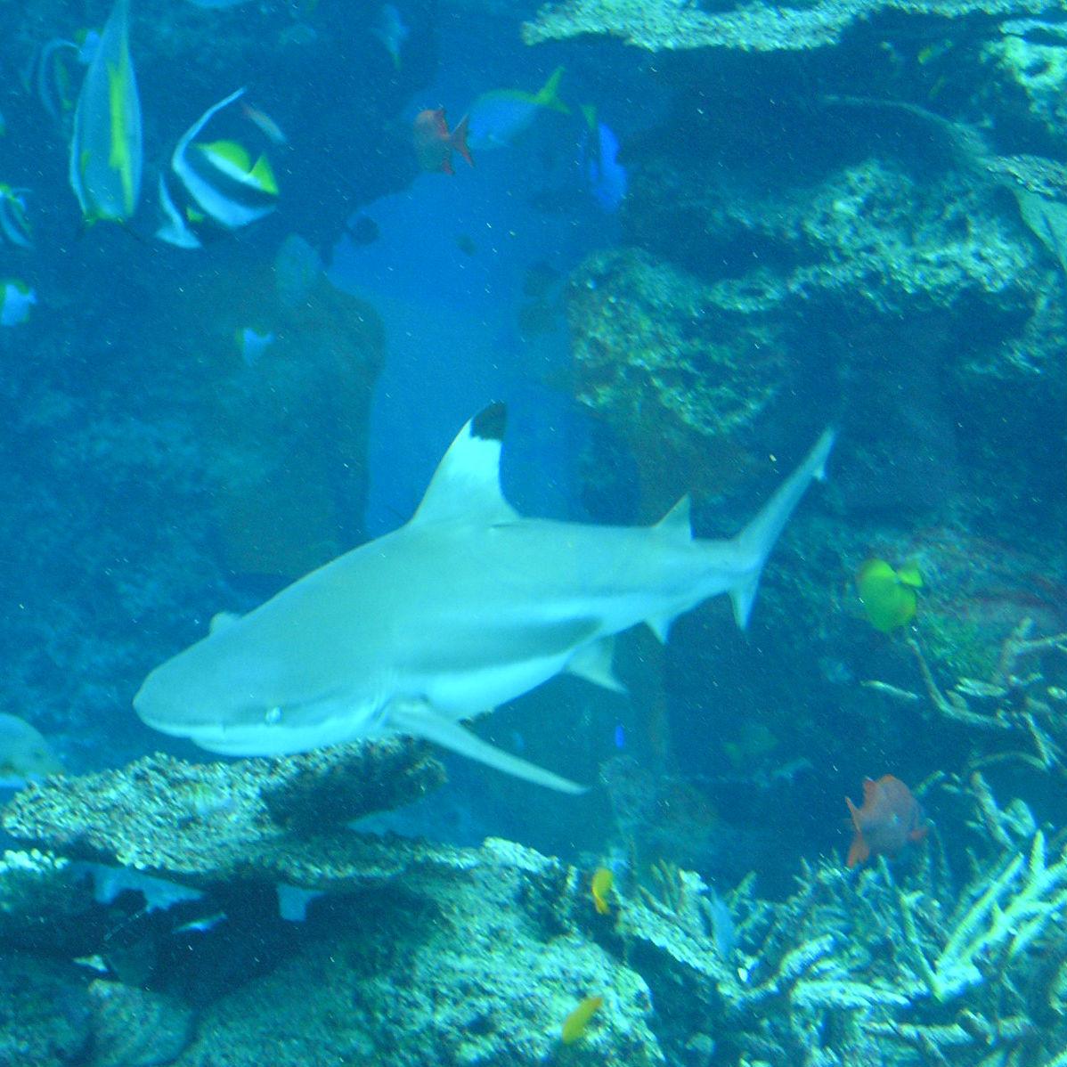 Q.最も長生きする魚「ニシオンデンザメ」の寿命は?→①100年 ②200年 ③400年