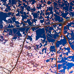 【花の怪談】花が美しいのには理由がある