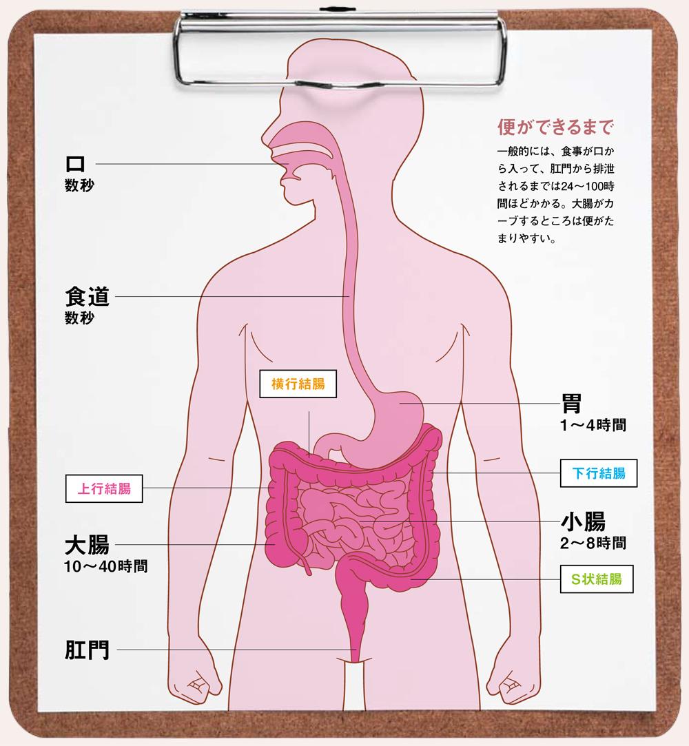 食べ た もの が 出る まで の 時間 食べてからどのくらいの時間で下痢になるの?どの食事か特定するには...