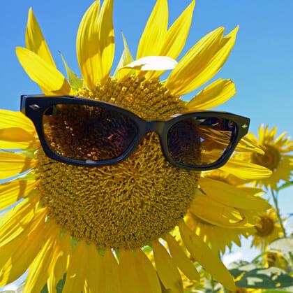 夏場は「サングラス」が有効!「疲労」対策の新常識【『一個人』夏号】