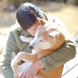 保護柴たちの未来を考える(番外編) ─かわいそうだから、という理由で保護犬を迎えないでほしい─